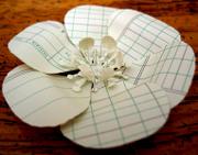 Ledgerflower